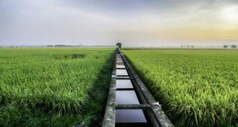 Ré-utilisation en irrigation
